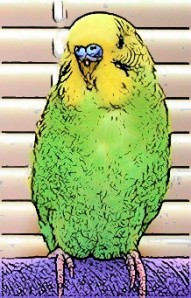 Budgie cartoon