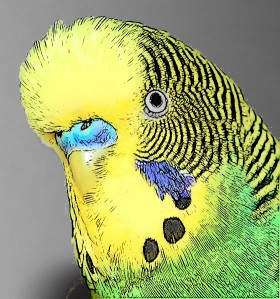 budgie head cartoon