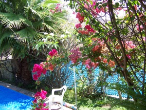 Flora around swimming pool